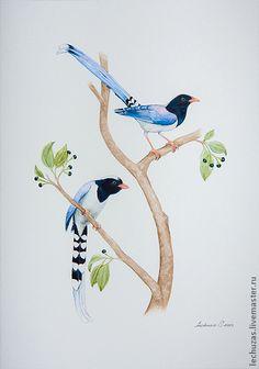 Red-billed Blue Magpie. Traditional art ( watercolor). Svetlana Markina (LechuzaS) . Size: 21cm*30cm