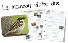 Documentaires - Bout de gomme Montessori Activities, Science, Homeschool, New York, Birds, This Or That Questions, Edm, Zoology, French Tips