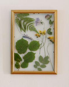 Inramade växter av Wilda på Reaktionista