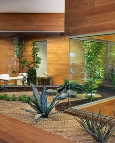 #office #design #interior #garden  #damilanostudioarchitects #officedesign #interiordesign #architecture #wood