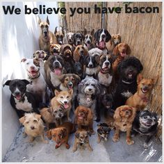 We believe you have bacon