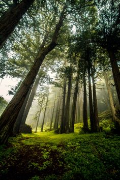 Morning Fog in the Forest by 5isalive on DeviantArt