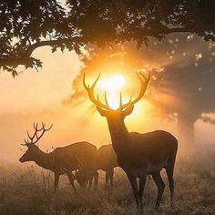 Beautiful deer at sunrise!