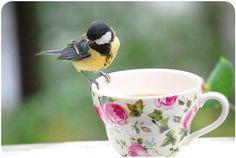 My secret : un thé et des amarettis aux groseilles