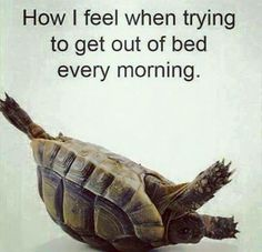 How we feel ha ha ,,,, and some just stay there!.... I'm gonna fight it as LONG as I am Possibly Able!! ~ M