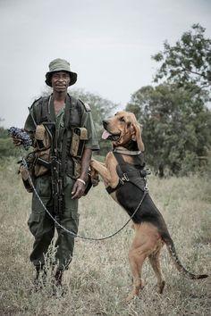 Isn't Leeu a beauty? Leeu means 'Lion' in Afrikaans. He fights poaching alongside the rangers at Hoedspruit Endangered Species Centre. Life Choices, Afrikaans, Endangered Species, Dog Friends, Ranger, South Africa, Centre, Lion, Wildlife