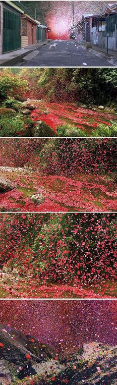 A small town in Costa Rica recently got an amazing visual treat. Sony has been filming a new commercial there for its 4k TV. The commercial required 8 million flower petals (that's how many pixels are on their new TV) that had to be shipped in from all over for the commercial. Then Sony used high-power industrial movie fans to cause a flower eruption. The results are stunning.
