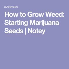 How to Grow Weed: Starting Marijuana Seeds   Notey
