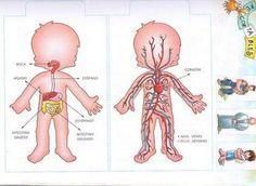 aparato digestivo para niños de preescolar - Buscar con Google