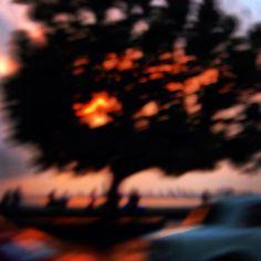 Tree on fire, Maya Bhalla 2014