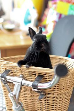 black bunny with a dramatic look
