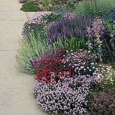 tough plants for parking strip. reborn parking strip is awash with pink stonecress, crimson dianthus, blue sage: Salvia juisicii and pastel Penstemon grandiflorus Xeriscape, Plants, Garden, Cottage Garden, Landscape Design, Lawn And Garden, Small Space Gardening, Outdoor Gardens, Dream Garden