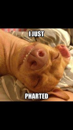 Tuna the dog @Kassidy Urling @Alea Shaner