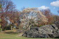 doitbutdoitnow - 5 TIPPS FÜR DEINEN URLAUB IN NEW YORK - Central Park im Herbst