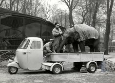 Vespa Ape and elephant