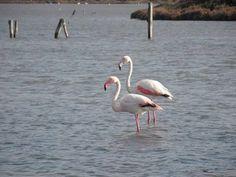 by http://ift.tt/1OJSkeg - Sardegna turismo by italylandscape.com #traveloffers #holiday | #fenicotteri #stagno #portopino #santannaarresi #sulcis #sardegna #love_sardegna #lovemysardegna #sardegnasuperpics #lanuovasardegna #unionesarda #lovesunitedsardegna #focusardegna #sardegnaexp #vivosardegna #ajosardegna #sardegnacountry #volgoitalia #volgosardegna #sardegnaofficial #lauralaccabadora #sardegnadaimillevolti #fotografando Foto presente anche su http://ift.tt/1tOf9XD | February 18 2016 at…