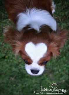 Love the heart shaped markings !