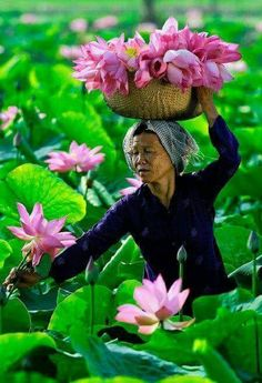 The people of Vietnam trying to make a living. Lotus Symbol, Travel Photographie, Beautiful Vietnam, Lotus Pond, Lotus Garden, Abs Women, People Of The World, Vietnam Travel, Cool Photos
