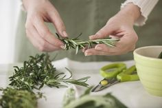 The Right Way To Freeze Fresh Herbs