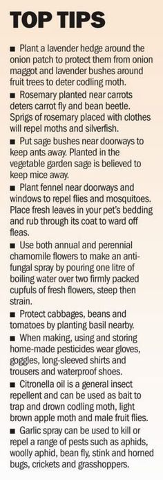 Pennie Woodward knows her bugs and her plants. A simple guide to companion planting and the uses of herbs. #OrganicGarden #companionplanting