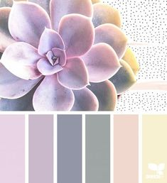 { succulent hues } image via: The post Succulent Hues appeared first on Design Seeds. Bedroom Colour Palette, Colour Pallette, Bedroom Colors, Bedroom Ideas, Design Seeds, Color Schemes Colour Palettes, Color Combos, Peach Color Palettes, Decoration Bedroom