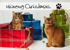 Just wishing you all a Merry Christmas from myself and the cats! (As with most of my images, this image is under a creative commons non-commercial licen. Christmas Kitten, Merry Christmas To You, Beautiful Christmas, My Images, Kittens, Deviantart, Creative, Animals, Animales