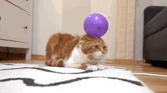 Cat & Balloon