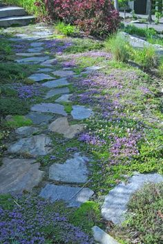 creeping thyme for pathway filler, looks like grass but you dont ...