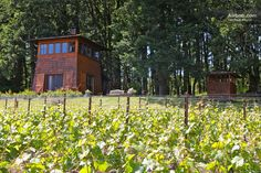 Great cabin - heart of wine country in Gaston