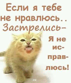 Одноклассники Russian Jokes, Truth Of Life, Funny Quotes About Life, Love Poems, Man Humor, Funny Moments, Beautiful Words, Funny Jokes, Funny Animals