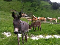 Pastorizia nelle Dolomiti, Alta Badia, Parco di Fanes Sennes Braies