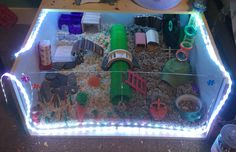 My hamsters DIY cage with a half and half theme! Hamster Bin Cage, Cool Hamster Cages, Hamster Toys, Hamster Stuff, Animals And Pets, Cute Animals, Small Animals, Hamster Supplies, Hamster Habitat
