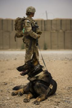 U.S. Airforce Staff Sgt. Jessie Johnson and K9 partner Chrach
