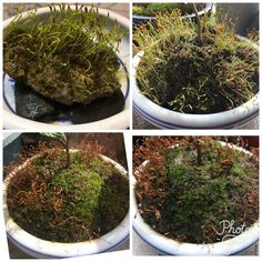 #Moss collection:Time it's everything