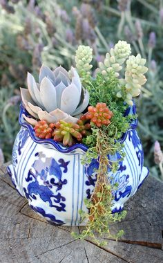 Succulent and sedum garden in blue and white pot www.LoveChrystal.com