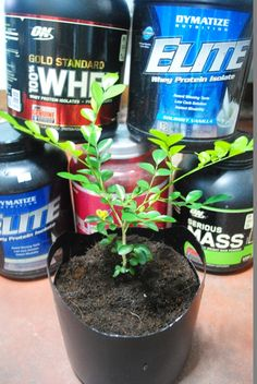 <p>I've been using protein powder for my strength training, and the empty containers just piled up. My girlfriend always asks me to throw them away, but something tells me that I shouldn't; have you ever felt this way? Anyway, one day it hit me. I came up with an idea …</p>