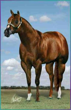 Pin by El alacrán. R Rocha on cuarto de milla horses | Pinterest ...