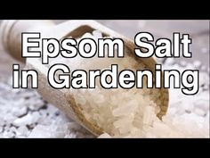 Is Epsom Salt Beneficial for Organic Gardening? Is Epsom Salt Beneficial for Organic Gardening? Organic Fertilizer, Organic Gardening, Gardening Tips, Sustainable Gardening, Aquaponics Fish, Aquaponics System, Aquaponics Greenhouse, Inside Garden, Garden Compost