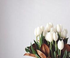 #whitetulips #delicate #nature