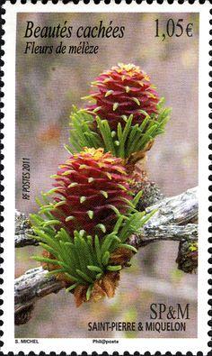 St Pierre & Miquelon Stamp - French
