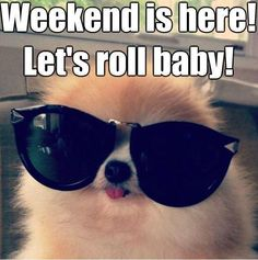 The weekend is here. Lets roll baby! #dog + sunglasses