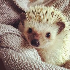 11 april 2015. Cute Animals Pictures of the Day.. Enjoy Image Source: Pinterest