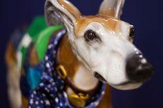 Albany Carousel Greyhound | Flickr