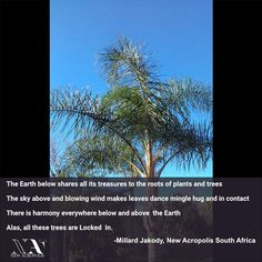 """""""The Earth below shares all its treasures to the roots of plants and trees. The sky above and blowing wind makes leaves dance mingle hug and in contact, There is harmony everywhere below and above the Earth. Alas, all these trees are Locked In."""" by Millard Jakody of New Acropolis South Africa. 💥☄️💥☄️. Beauty can be found in all places, we just need the right perspective. Blowing Wind, Acropolis, South Africa, Hug, Perspective, Roots, Trees, Leaves, Earth"""