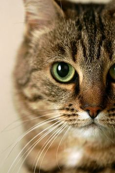 Gato - Animal -> Por: Angel Catalán Rocher! CLICK -> pinterest.com/AngelCatalan20/boards/ <- Sígueme!