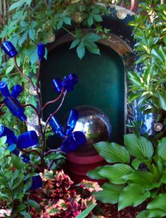 Lovely cobalt blue bottle tree within a small garden setting.