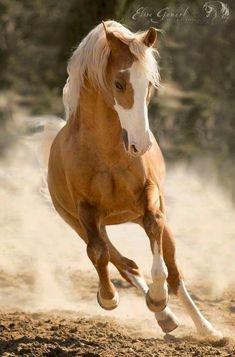 Paint horse running kicking up the dust. 96) I Love Horses