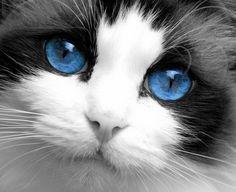 Big beautiful blue eyes