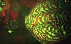 First 'Glowing' Sea Turtle Discovered in Solomon Islands