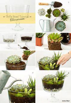 Arranjo de plantas suculentas em taça de vidro